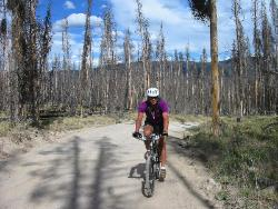 Jim in burned forest at Yellowstone